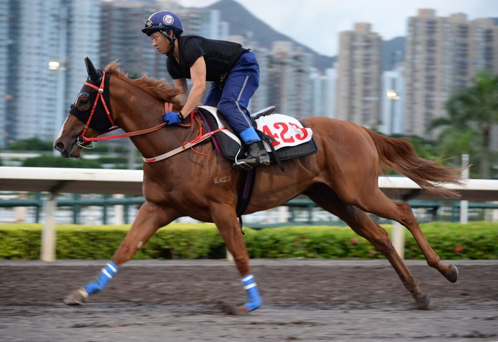 Five Elements gallops on the all-weather track on Thursday morning.