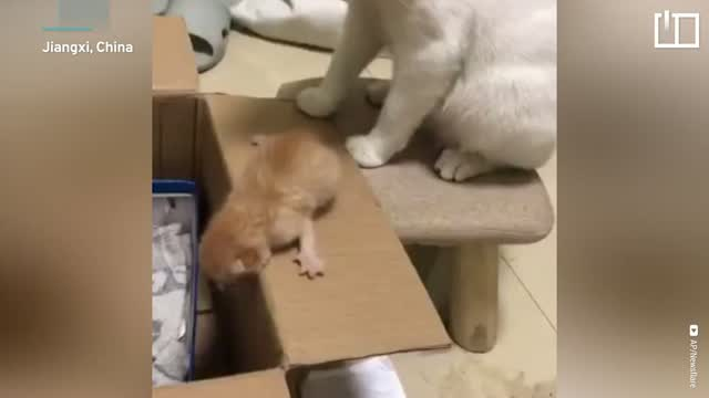 Mother cat loses patience with kitten