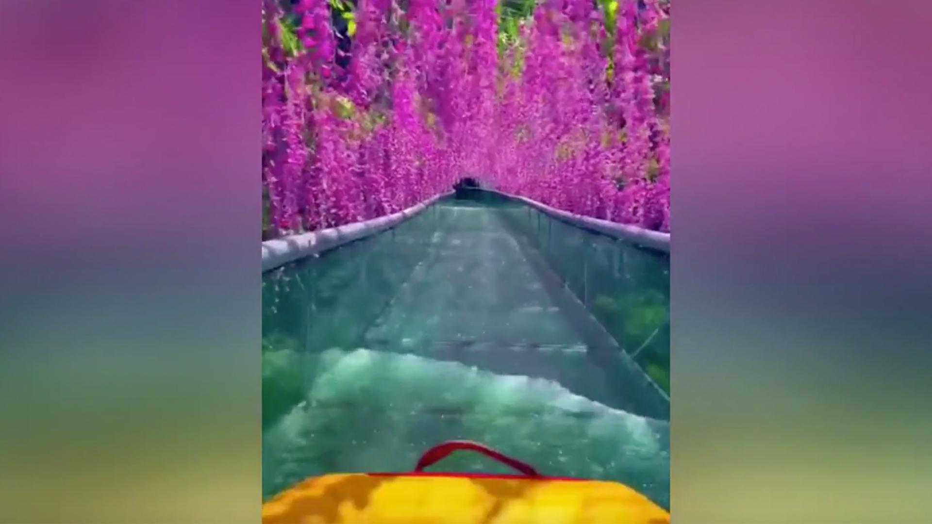 Floating under flowers