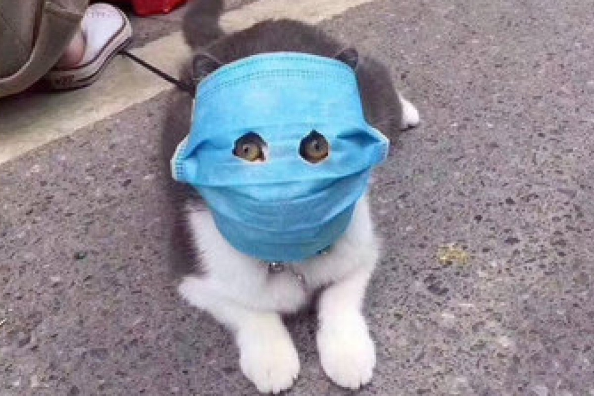 """More protected than you human plebs still scrambling to find face masks."" (Picture: 里神楽 via Weibo)"