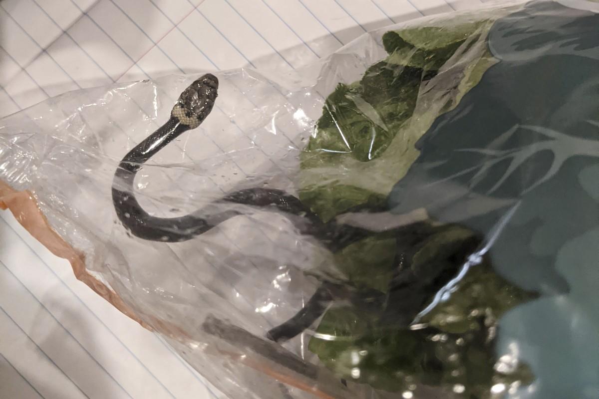 Snake Amazing Facts