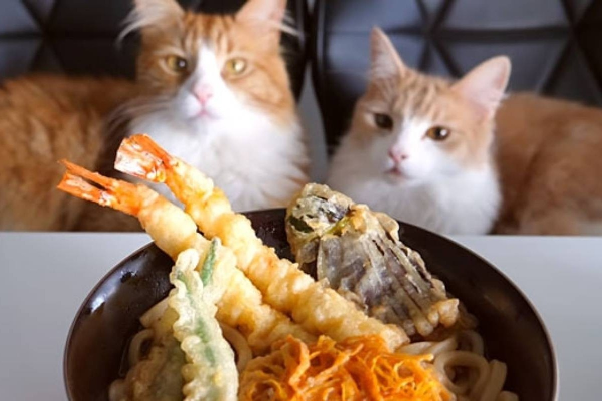 Youtube Channel Junskitchen Combines Two Cornerstones Of The Site Cats And Cooking South China Morning Post