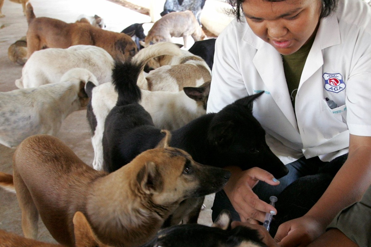 9c92ecc70229 A health worker gives a rabies shot to a stray dog at a government shelter  in