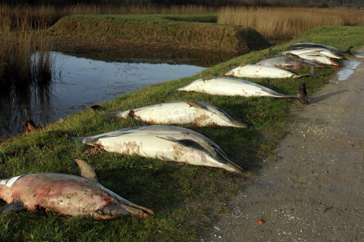 Gruesome mystery as 1,100 dead dolphins, many mutilated and