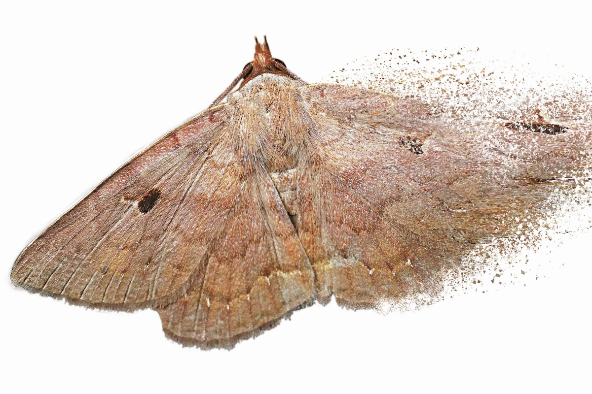 The Insect Apocalypse Is Coming Hong Kong Moth Study Shows The