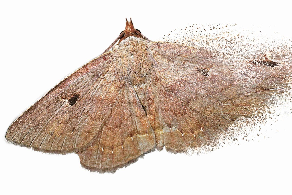 The insect apocalypse is coming: Hong Kong moth study shows the