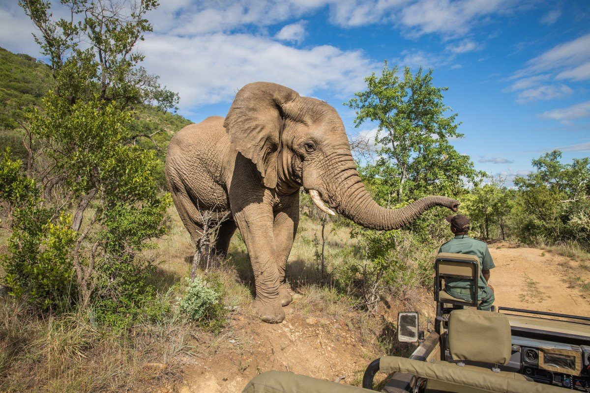 Suspected rhino poacher is killed by an elephant and