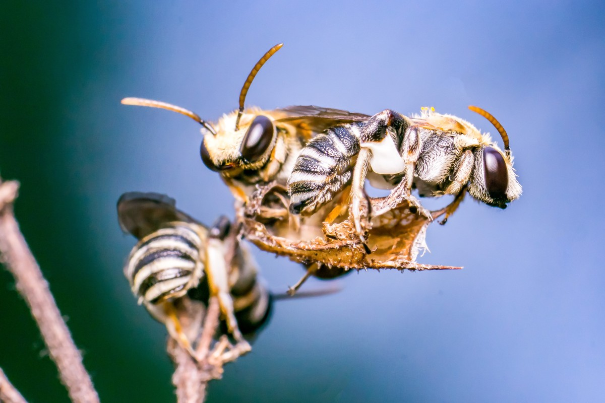 Groovy Doctor Finds Four Sweat Bees Living In 29 Year Old Uwap Interior Chair Design Uwaporg