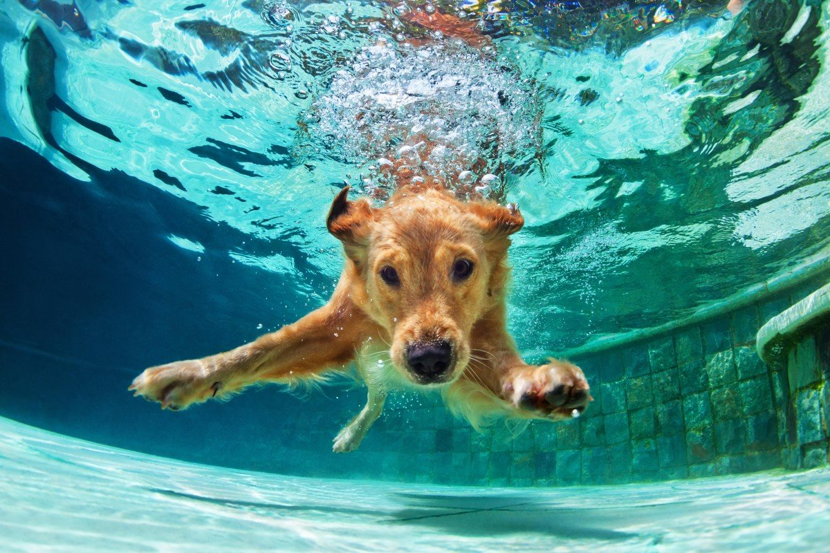 Hydrotherapy for dogs allows them to exercise and play without putting any weight on joints. It helps dogs with arthritis or hip dysplasia, and those recovering from hip or spinal surgery, making them stronger and more mobile.