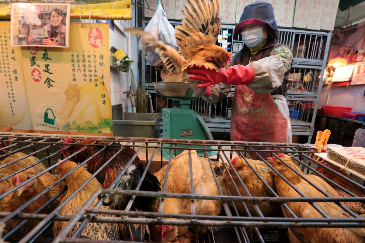 China chicken prices jump on supply shortage as consumers