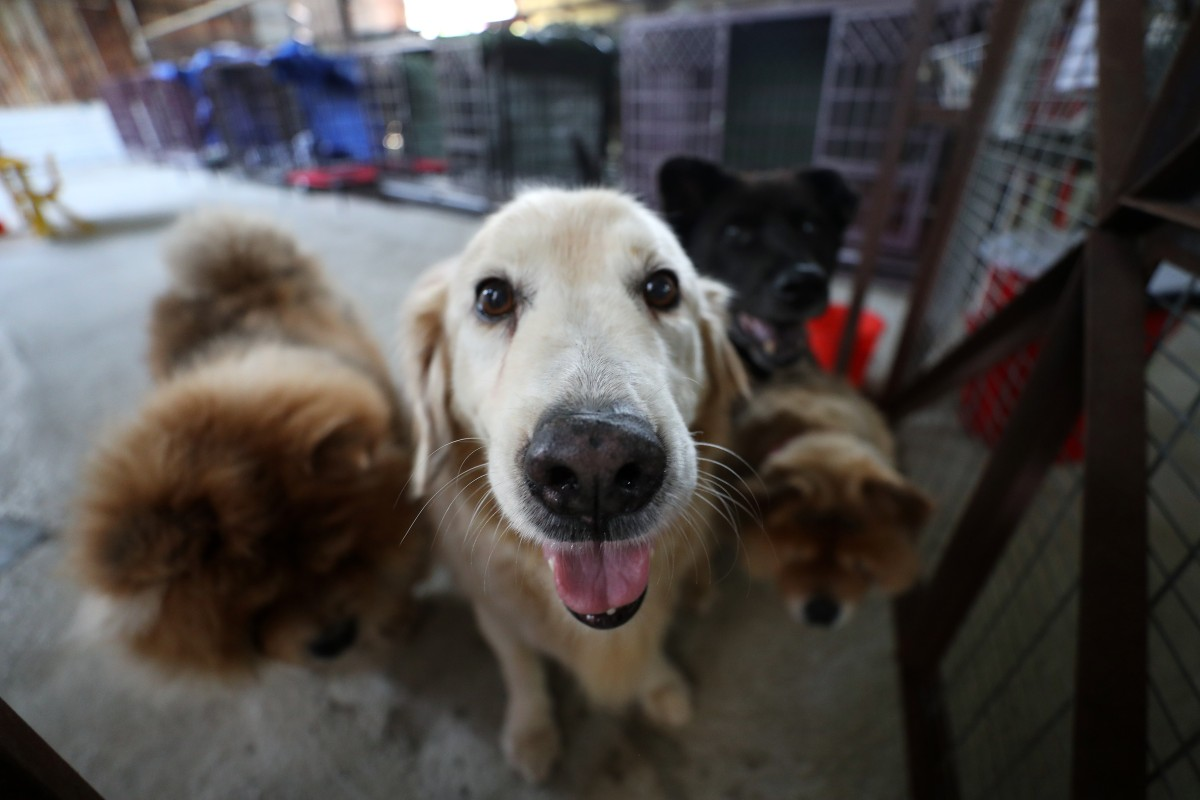 Dogs from the House of Joy and Mercy, a shelter that houses old and sick dogs in Yuen Long. Photo: Winson Wong