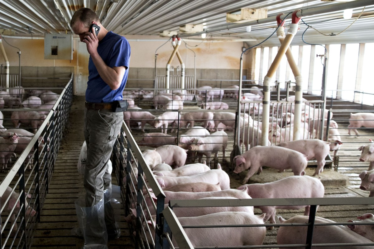 US pork producers say they are losing US$8 per animal because of the dispute with China. Photo: Bloomberg