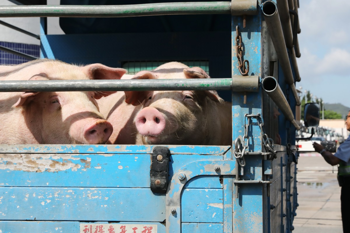 Pork prices expected to double during Dragon Boat Festival