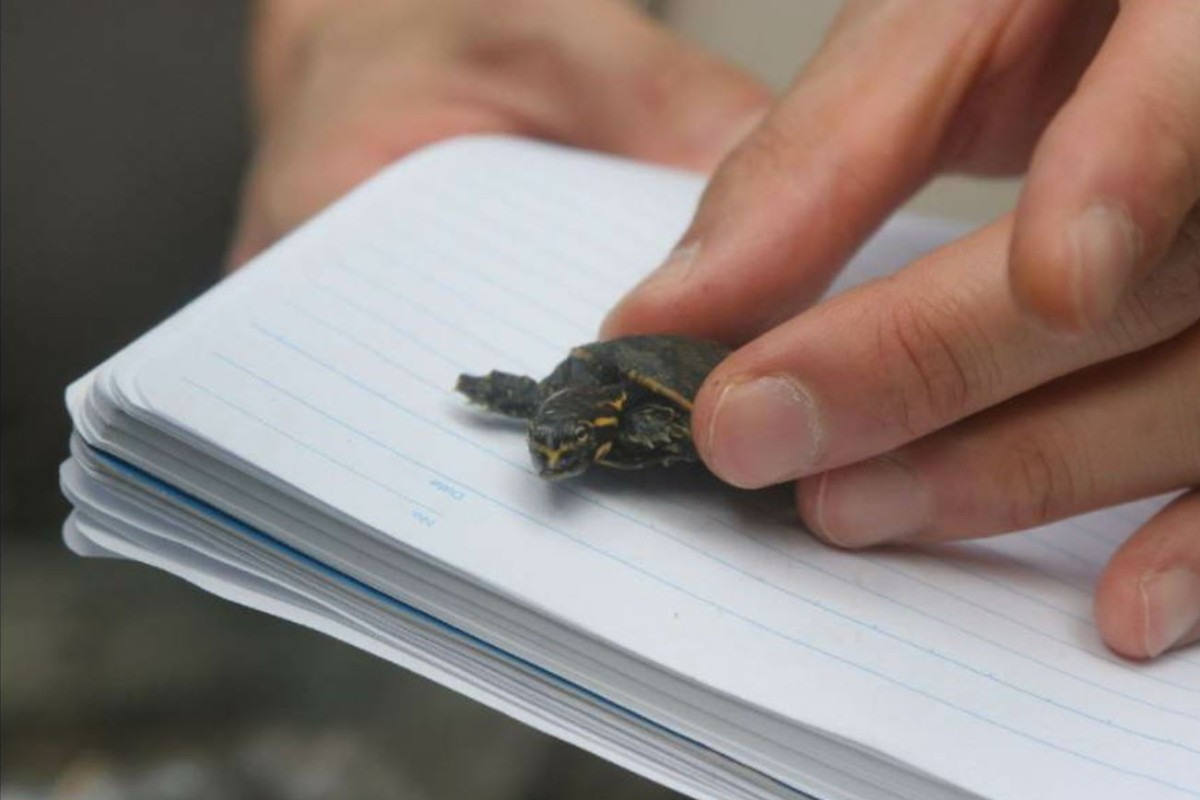 New Jersey man gets two years probation for role in turtle