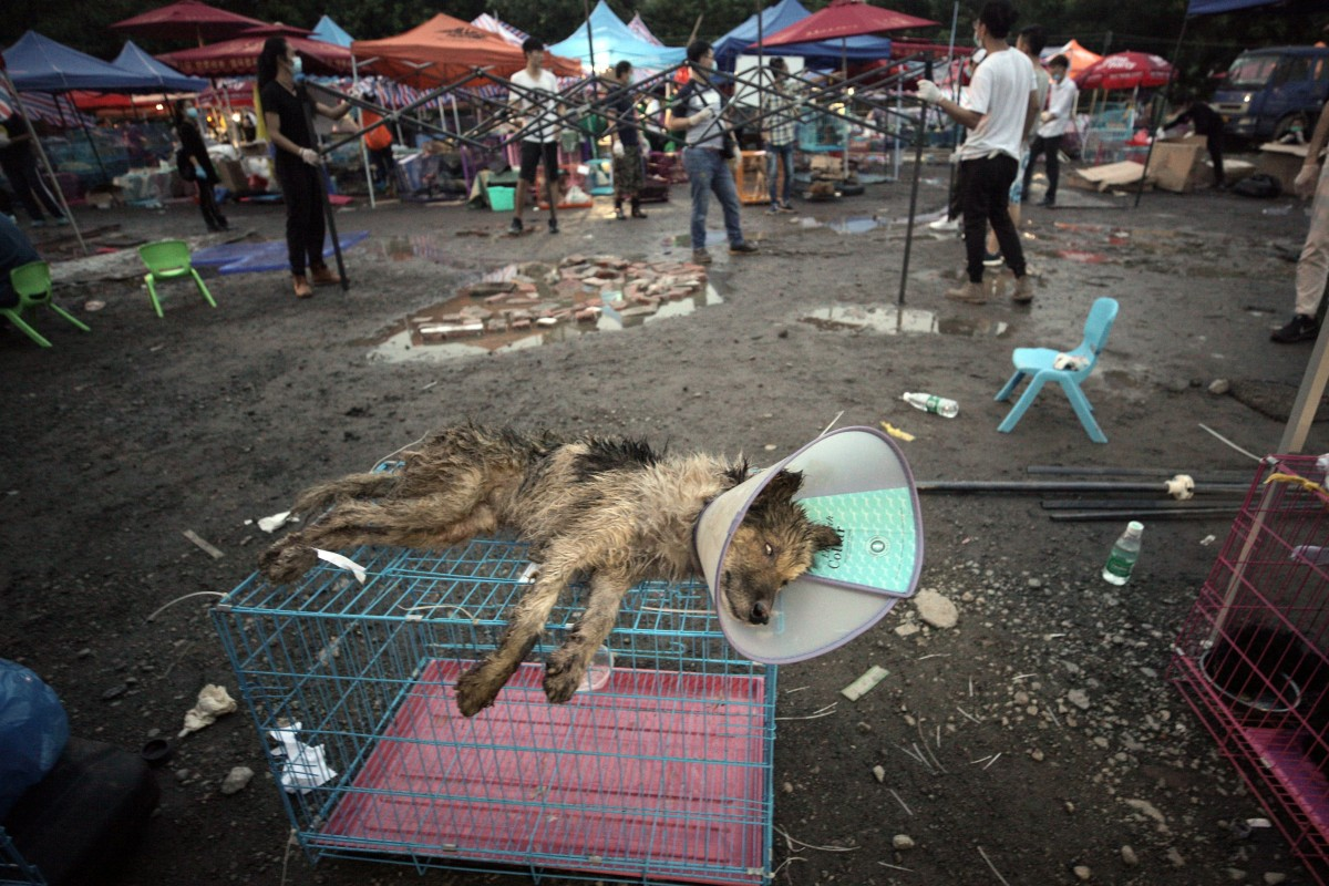 The ritual slaughter of 100,000 animals at China's Yulin Dog Meat Festival is abhorrent, cruel, and must be...