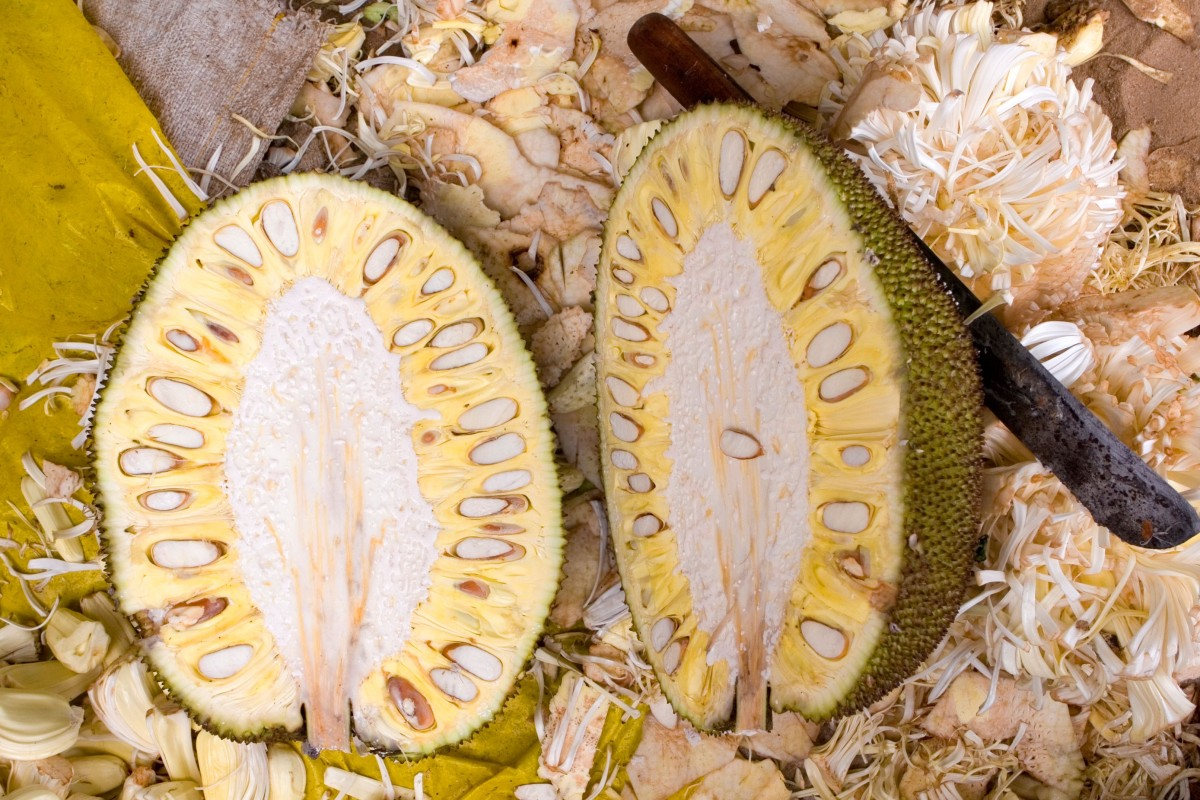 Why jackfruit is good for you: the health benefits of vegan meat substitute that's so trendy