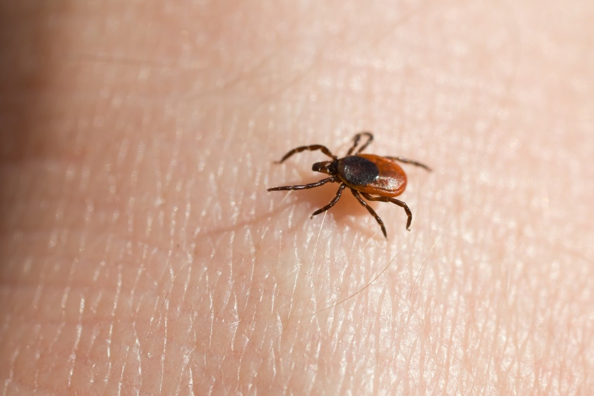Best Tick Repellent For Humans 2020.Did Us Military Turn Ticks Into Secret Bioweapons South