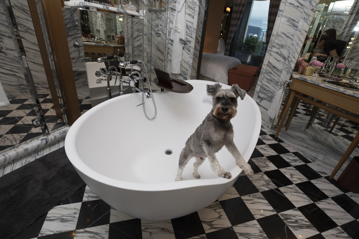 Rescue dog rehab: how hydrotherapy gets them back on their