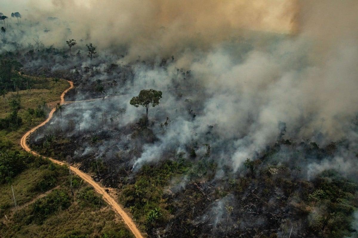 Amazon deforestation explodes under Brazil's president