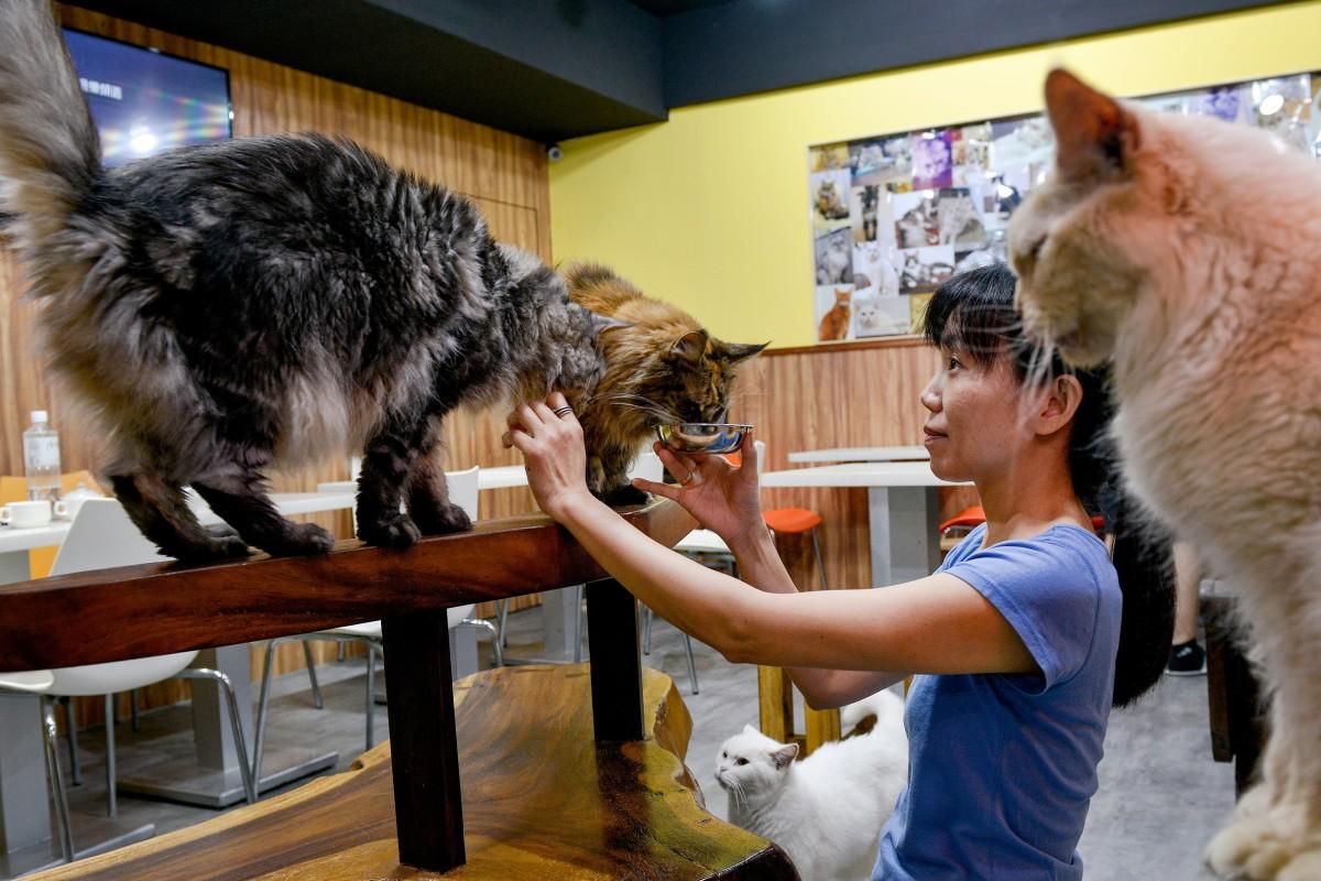 Pets | South China Morning Post