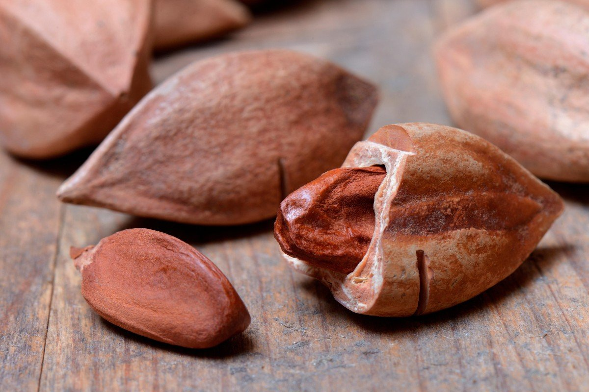 Health benefits of pili nuts: keto diet favourite is a superfood high in vitamins, minerals and antioxidants