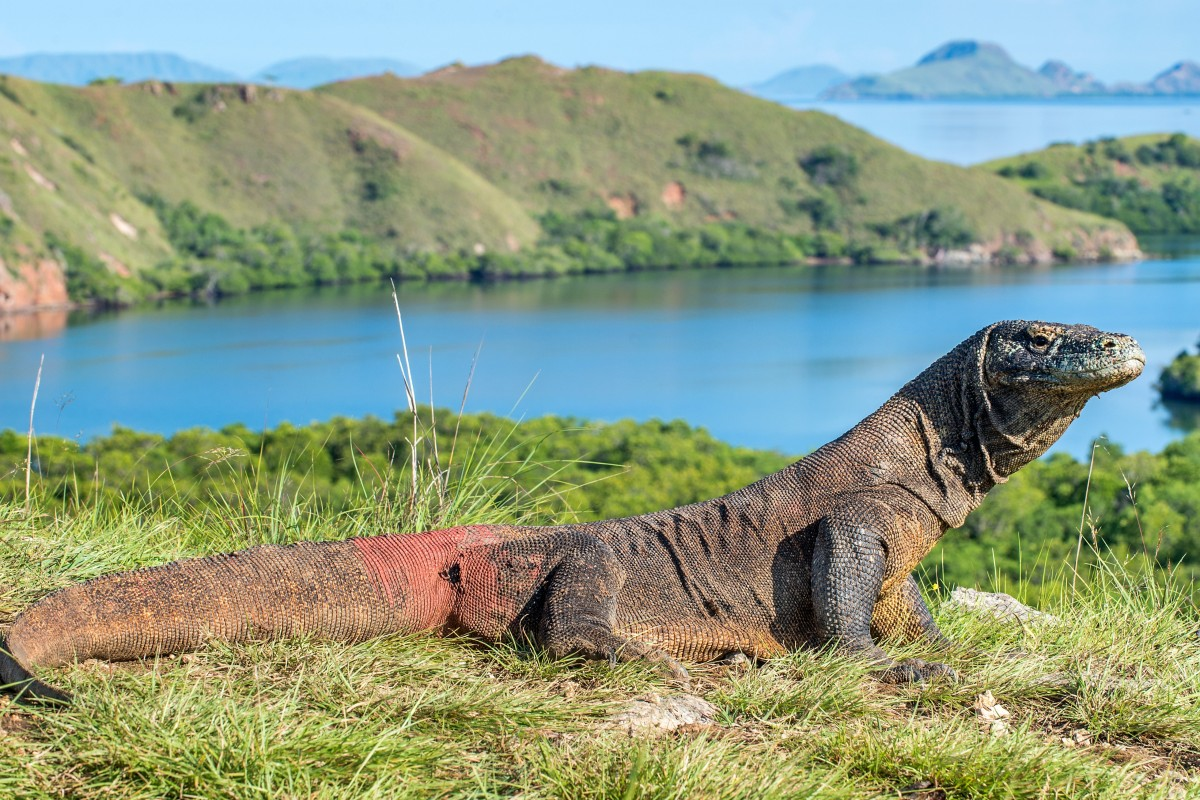 Komodo National Park is staying open, but at US$1,000 to visit its dragons,  will anyone go?   South China Morning Post