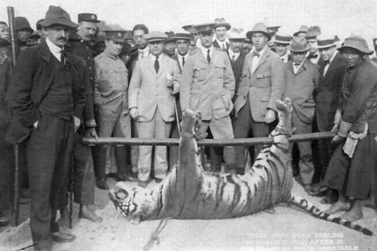 American hunter who hastened demise of the South China tiger, and how Mao's assault on nature finished it off