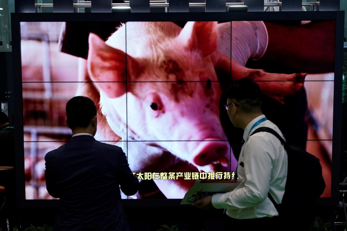 African Swine Fever has helped wipe out up to half of China's pig population, cutting demand for US soybeans. Photo: Reuters