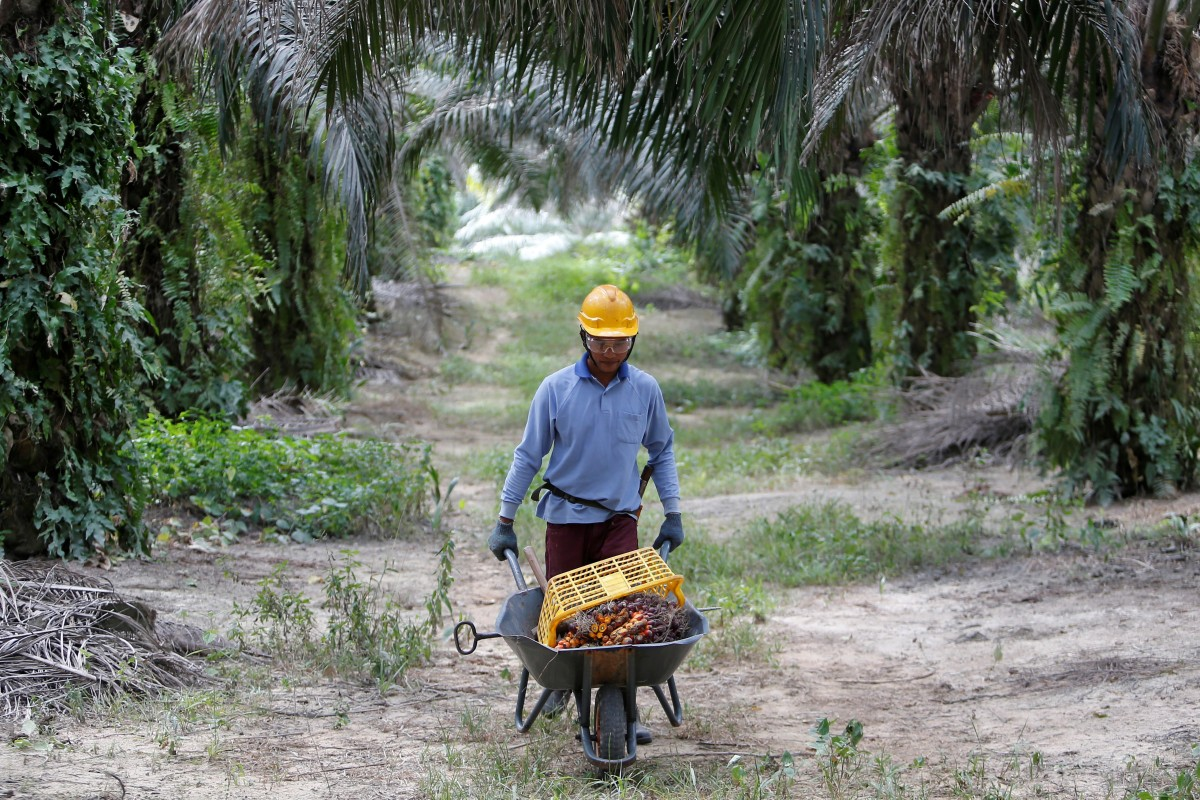 India bans Malaysian palm oil as diplomatic rift widens