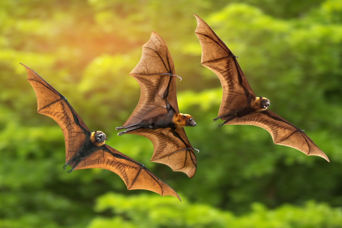 Image result for bat pictures