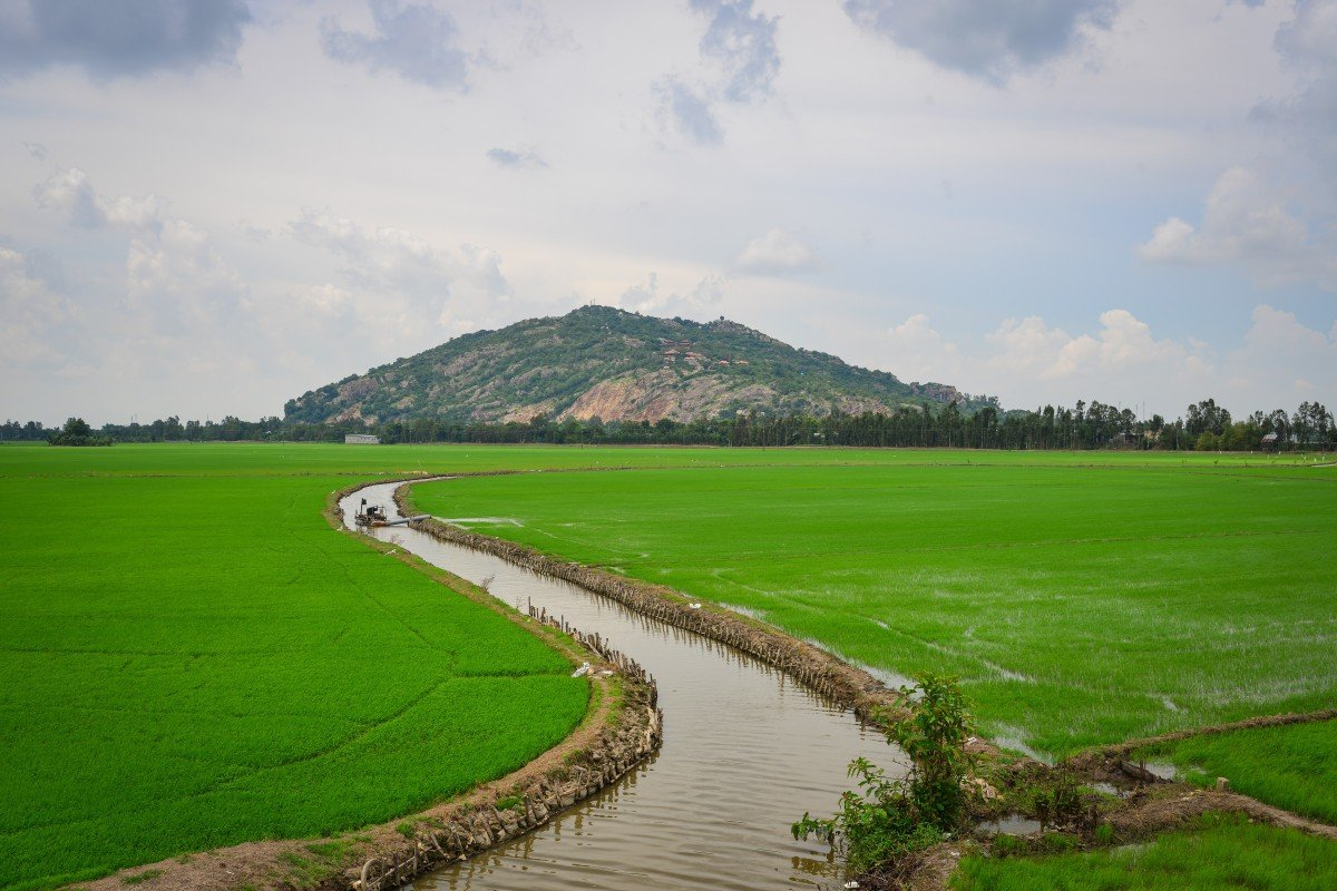 Rice fields in the Mekong Delta of Southern Vietnam. Photo: Shutterstock
