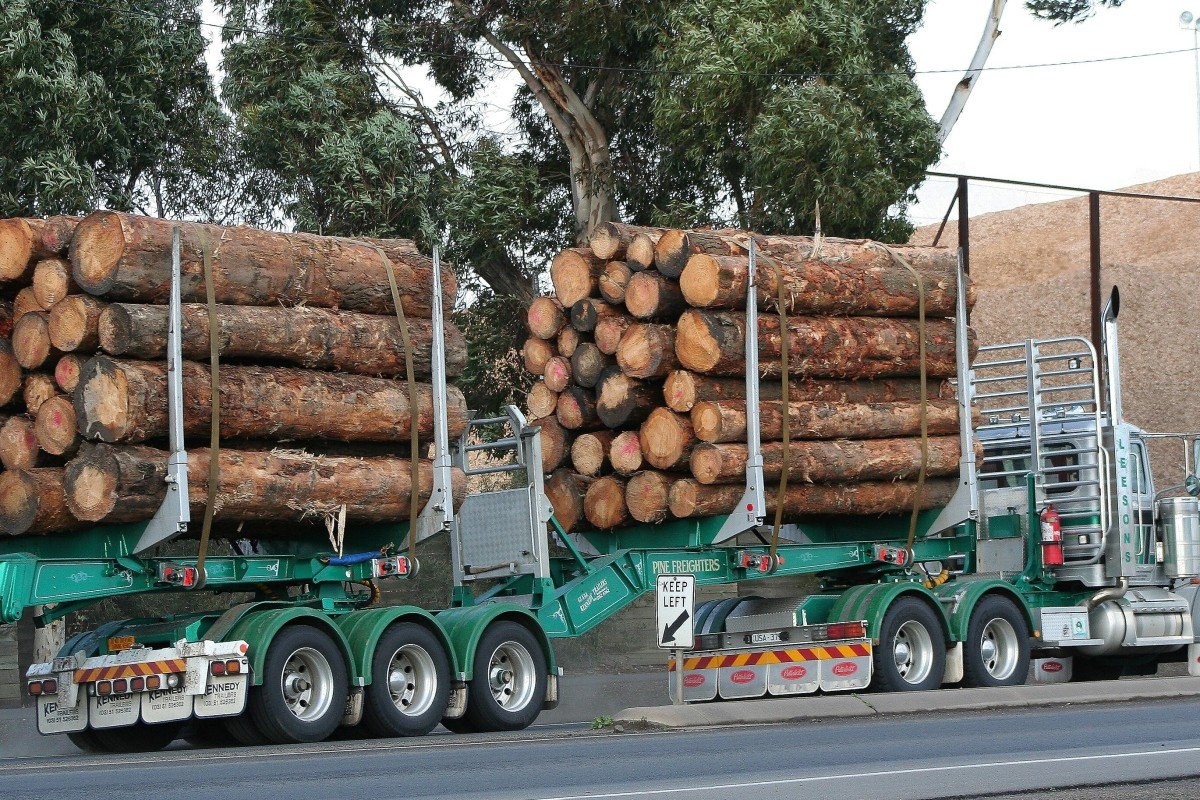 Last week, importers in China were verbally advised to avoid purchases of seven Australian products, including log timber, as tensions between the two countries increased. Photo: Shutterstock