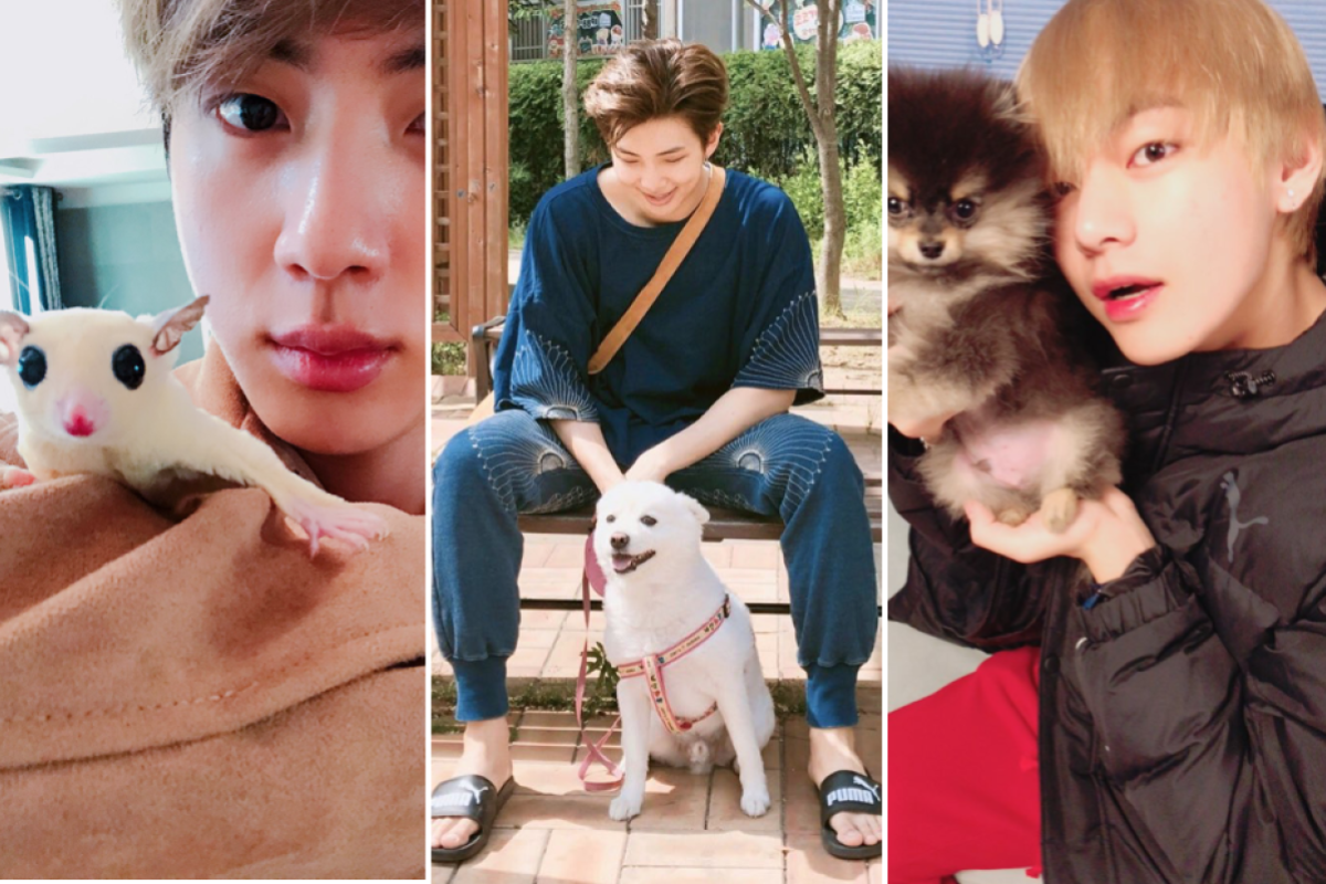 BTS members love their pets and post cute dog photos to Instagram just like  us – from V's Yeontan and Jungkook's Gureum to Jimin's Ddosun, these are  all the K-pop boy group's