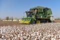 Xinjiang is China's biggest producer of cotton. Photo: XInhua