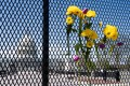 Flowers adorn the fence surrounding the US Capitol in Washington, DC on Saturday. Photo: AFP