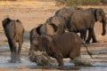 A herd of elephants at a watering hole inside Hwange National Park in Zimbabwe. File photo: Reuters