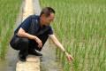 Yuan Longping inspects a trial plantation of hybrid rice. Photo: Xinhua
