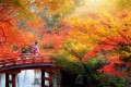 Japan offers travellers serenity. Photo: Lightfoot Travel