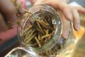 A high price and ease of portability made cordyceps a popular currency among corrupt officials. Photo: David Wong