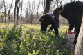 Beijing residents help themselves to wild Chinese violet cress – known as eryuelan in Mandarin – growing in public parks. Photo: Weibo