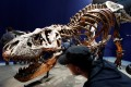Visitors look at a 67 million year-old skeleton of a Tyrannosaurus Rex dinosaur in Paris. Photo: Reuters