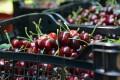Baskets of cherries. Photo: Xinhua