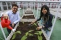 Jeff Chan (left) from Jones Lang LaSalle and farming expert Michelle Hong from Rooftop Republic. Photo: Jonathan Wong