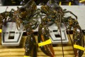 Lobsters displayed at a market. Japan's newest troublemaking gang has called themselves the 'Bad Lobsters'. Photo: AP