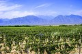 Vineyards at the eastern foothills of the Helan Mountains, also known as the Alashan Mountains, in the Ningxia Autonomous Region. Photo: Ningxia government