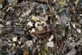 Plastic waste on a beach in the Philippines. The single-use plastic waste crisis has reached some of the world's most remove islands in the Indian Ocean, according to a new study. Photo: AFP