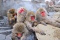 Macaques bathe in hot springs in Nagano, Japan. Walk Japan has put together two five-day walking tours through lesser-known parts of the country.