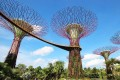 Visitors to Singapore's Gardens by the Bay can enjoy a panoramic view of the nature park at Supertree Grove's elevated walkway, held up by 50-metre high treelike structures. Photos: Klook