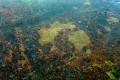 Burnt areas of the Amazon rainforest, near Boca do Acre, Amazonas state, Brazil. Photo: AFP
