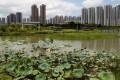 The wetland park in Tin Shui Wai. Photo: May Tse